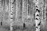 XXL4-023 Woods